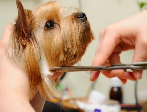 Стрижка, груминг и тримминг собак